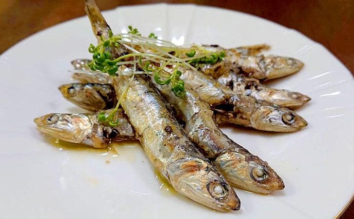 【釣果レシピ】オイルサーディン:あっという間に手軽な保存食が完成