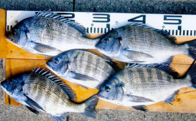 波止からのフカセ釣りで37cm頭にチヌ5匹【福岡県・苅田港】