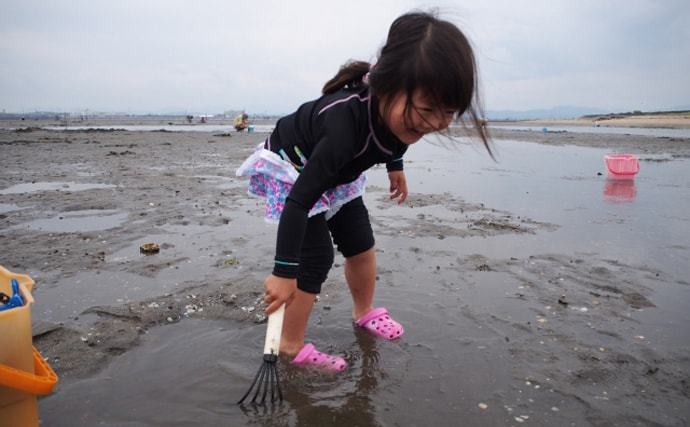 東京湾での外来種の出世頭? 『ホンビノスガイ』を考える