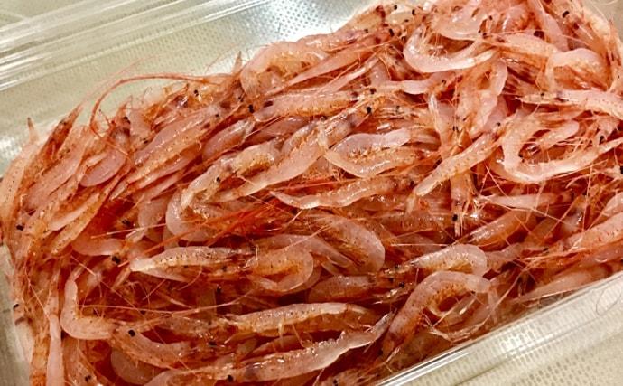 不漁続きのサクラエビは復活するか 2020年も続く規制と見えてきた光明