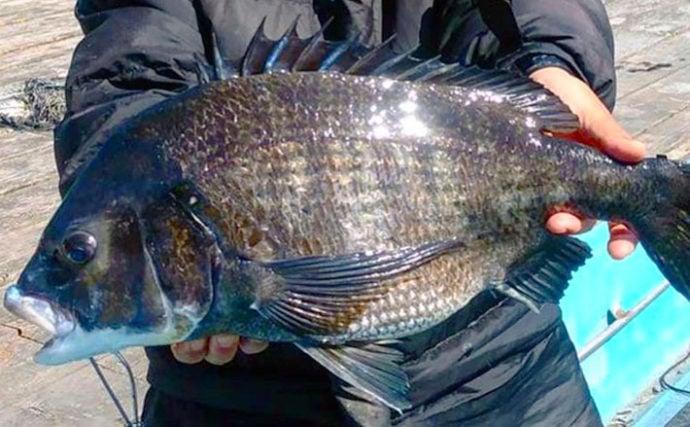 【三重】カカリ釣り最新釣果 乗っ込みクロダイ好調で59cm浮上