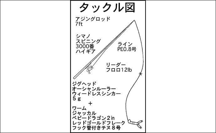 人生初チニング1投目で奇跡的ヒット 47.3cmクロダイ手中【奥浜名湖】