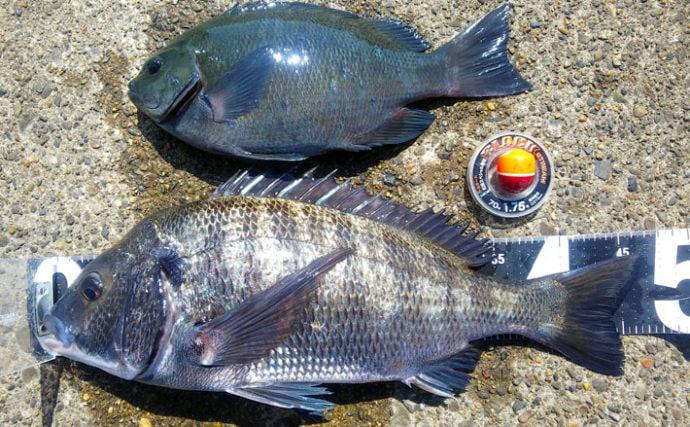 地磯でのフカセ釣りで46cmクロダイにメジナを御用【千葉・館山】