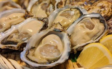 東京湾で牡蠣を養殖する? プロも評価する「江戸前」の味とは