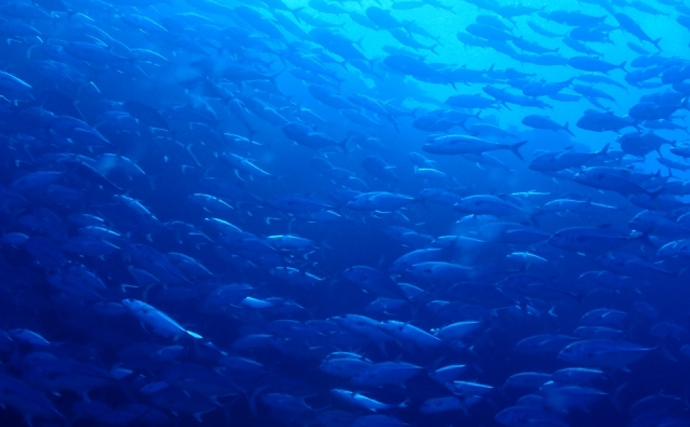 国際的な嫌われ者『黄砂』が海のサカナを育てる不思議 温暖化対策にも?