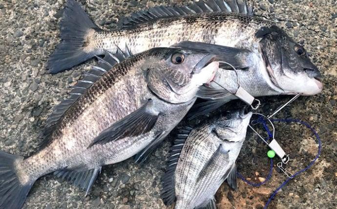 浅場で乗っ込みクロダイを狙う 『ウキダンゴ釣り』で良型手中【静岡】