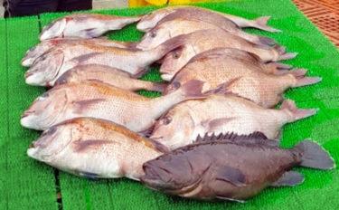 【愛知・三重】海上釣り堀最新釣果 マダイにマハタにクエに高級魚乱舞