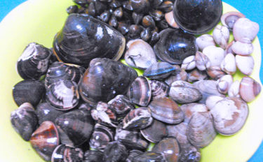 潮干狩りの前に必ずチェック 恐ろしい「貝毒」と対策について解説