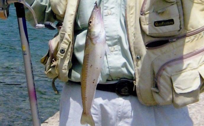 3日間の投げキス釣りで入れ食い堪能 本命423匹キャッチ【長崎・対馬】