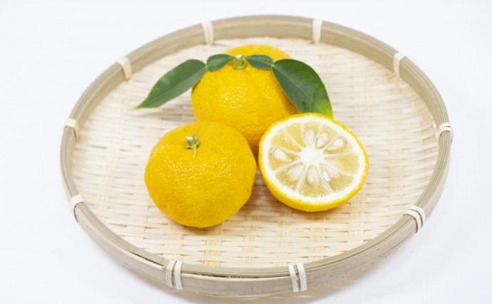 柑橘類を食べさせるとサカナが美味しくなるワケ 元々は変色防止だった?