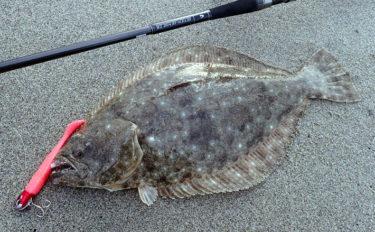 遠州灘サーフゲームの楽しみ方 朝マヅメは青物で干潮時はフラット狙い