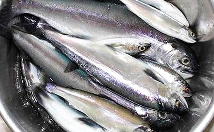 ボートサビキ釣りで楽しむヒメマス釣り 制限30尾キャッチ【西湖】