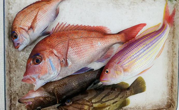 タイラバ釣行で本命マダイ他ホウキハタなど多彩釣果【フィッシング光栄】