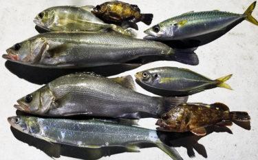 名古屋港ナイトボートゲームで8種目全50匹超えの多彩釣果【愛知】