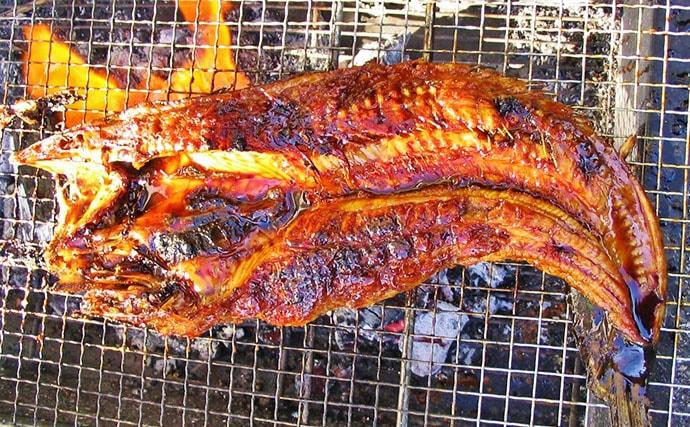 【釣果レシピ】ナマズのかば焼き:室町時代はかまぼこの原料だった?