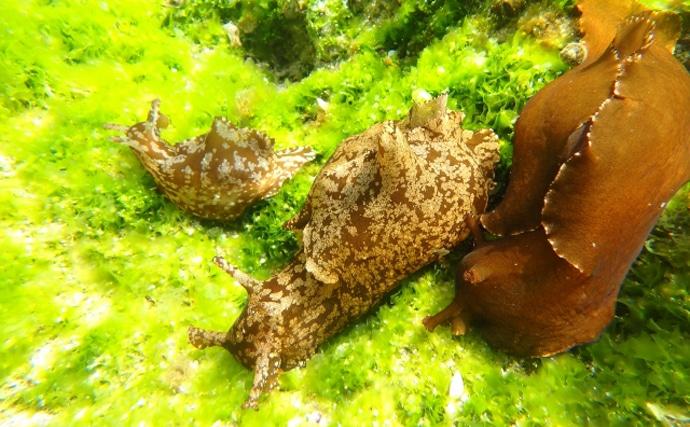 見た目はとても美しいけど「意外すぎる」生態を持つ『ウミウシ』の不思議