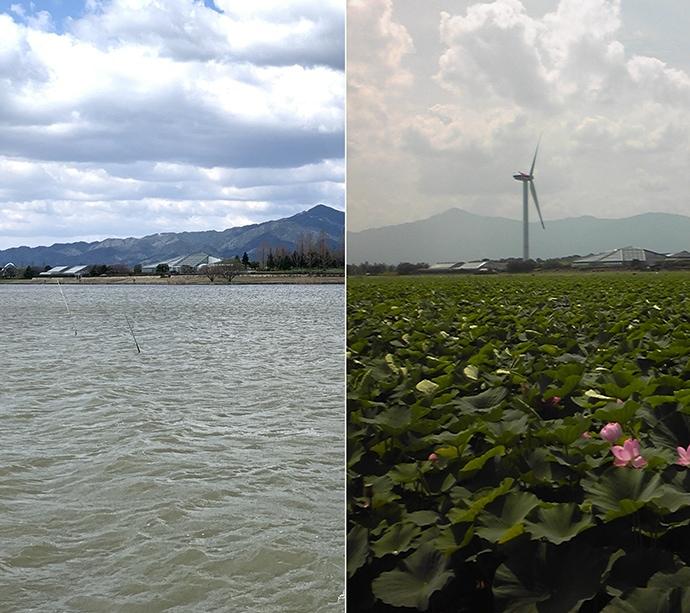 琵琶湖の釣り場「今昔物語」:湖南・東岸編 風車やハス群生地は消滅