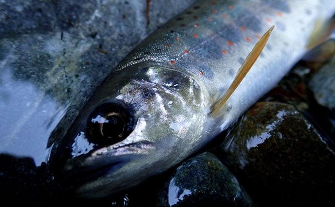 【2020初夏】おすすめアマゴ釣り場紹介:天ノ川/奈良県天川村