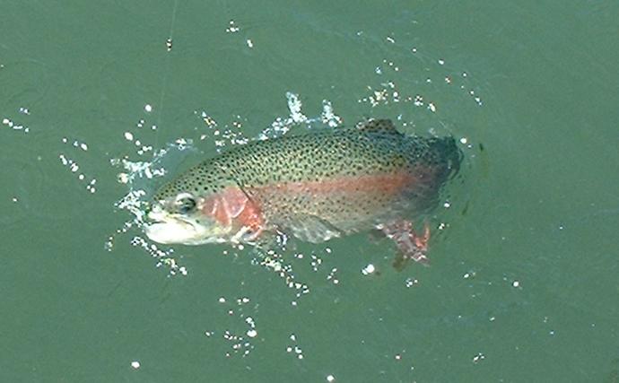 管理釣り場攻略に有効な『毛バリ』とは フライタイイングについても解説