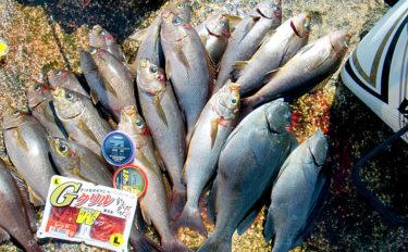 遠征磯フカセ釣りで良型イサギ連発 本命グレは産卵期で食い渋り【高知】