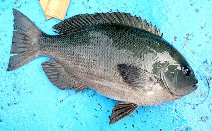 波止のフカセグレ釣りは『まきエサ』が命 釣り場状況別配合パターン4選