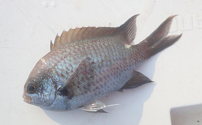 【釣った海水魚を飼育してみよう】対象魚セレクト編:専門家が基準を解説