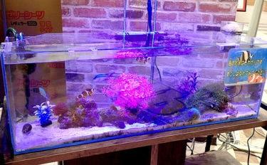 【釣った海水魚を飼育してみよう】アイテム編:必要な道具について