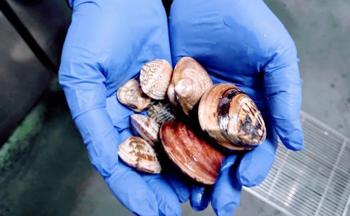 プロが教える「旬魚」の見分け方:『貝類』 アサリもハマグリも春が旬