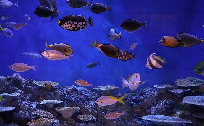 【釣った海水魚を飼育してみよう】水槽内の住みやすい環境作りについて