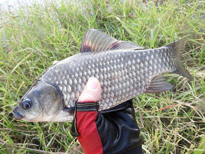 身近な河川で気軽に入門 4,000円以下で購入できる『淡水エサ釣り』竿