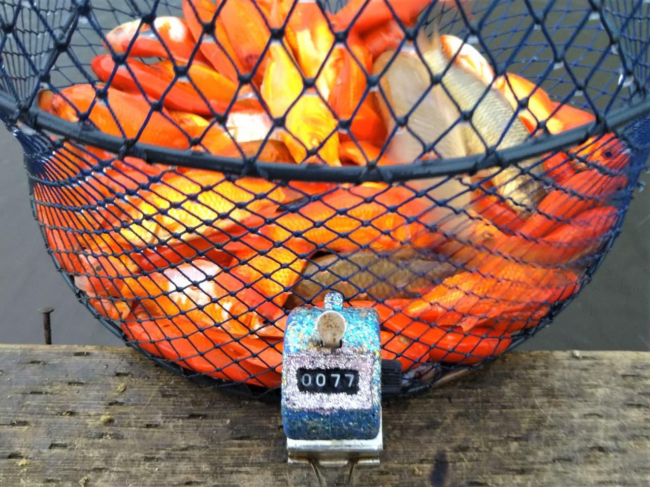自宅生活をちょっと楽しく:数釣りの味方『デコカウンター』を自作しよう