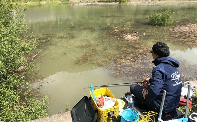 ヘラブナ釣り初心者入門 野釣りで乗っ込み大型ベラと勝負(第8回)