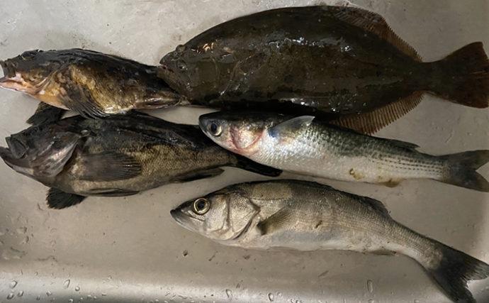 伊勢湾奥『ぶっこみ釣り』で五目達成 春爛漫の釣果に満足【霞埠頭】