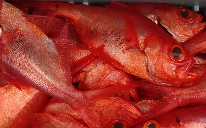 深海釣りで止まらぬアタリに興奮 キンメダイ40匹以上【静岡・隆栄丸】