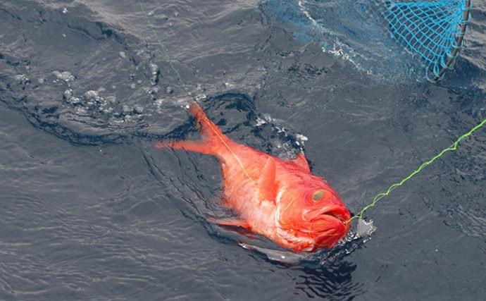 『キンメダイの聖地』で遊漁船約100軒が一時休業へ 伊豆漁協に取材