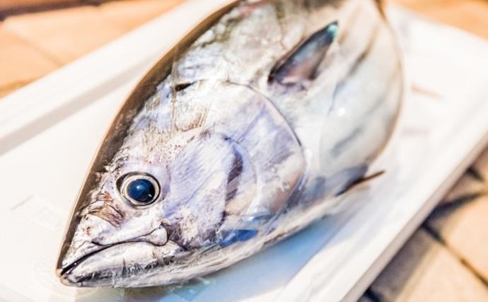 【東日本編】5月に旬を迎える海の幸5選 北陸は肝パンのウマヅラハギ