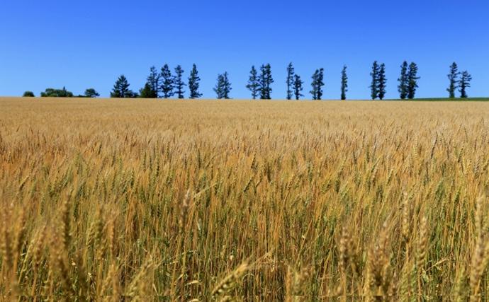 「麦わら」を名に冠したサカナたち 全て良い意味というわけではない?