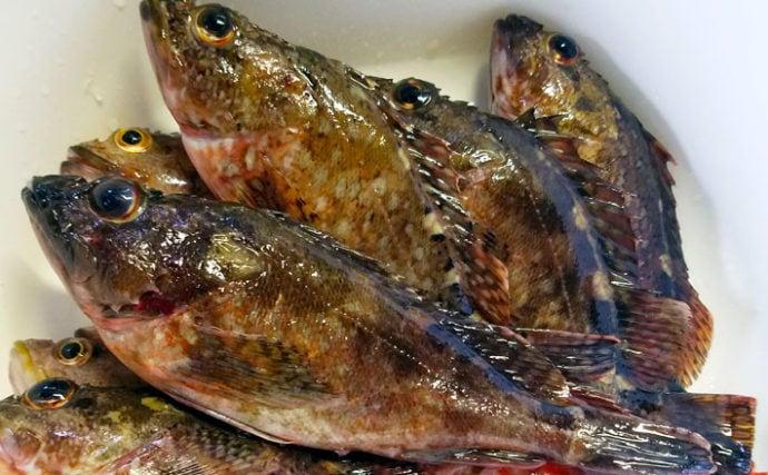 沖波止で根魚釣り アラカブ入れ食いに30cm超アコウも【佐賀・呼子】