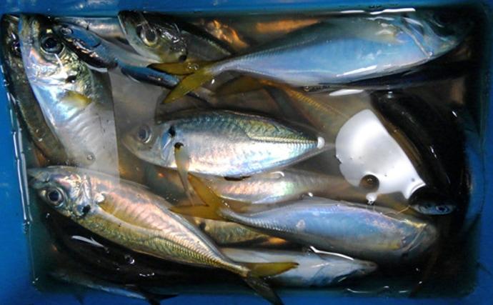 初夏の東京湾『金アジ』が絶品の理由 ノドグロと同等の価格になることも
