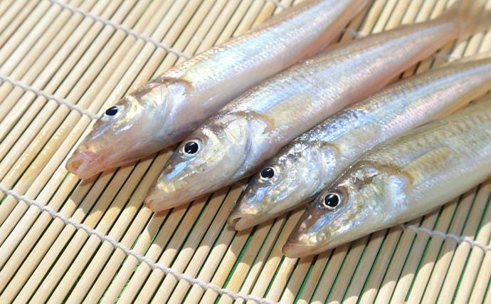 『梅雨冷え』をサカナで撃退 効果的な3つの栄養素と具体的な魚種を紹介