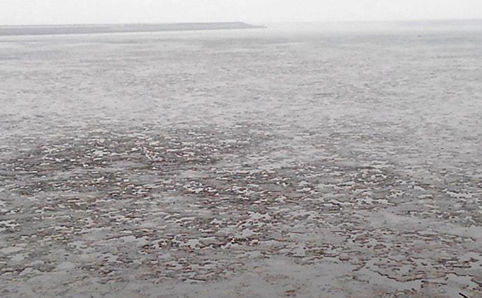 サカナで地域活性化:有明海のモンスター魚『ワラスボ』襲来【佐賀】