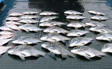ステップアップ解説:クロダイ狙いカカリ釣り 場所を見る目を養おう