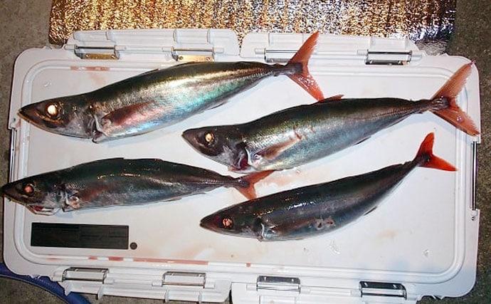 本命よりも美味しい? オフショアジギング『ゲスト魚』の食味を紹介