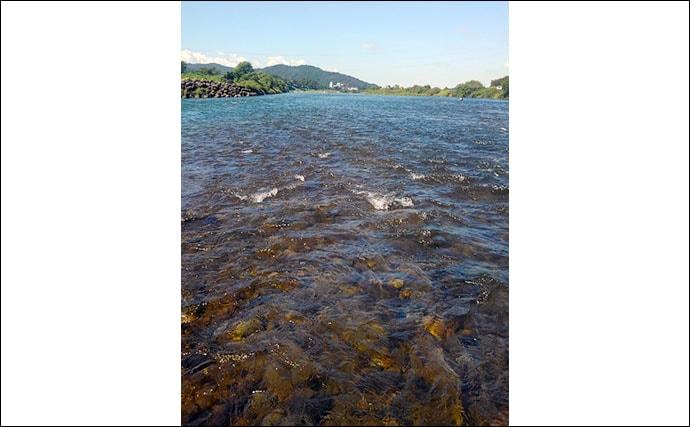 【2020】アユのトモ釣りオススメ河川:九頭竜川 激流攻略がカギ