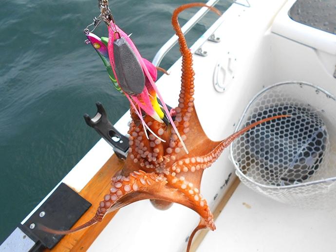 今シーズン初の『明石タコ』釣行 白系エギカラー的中で24ハイ手中