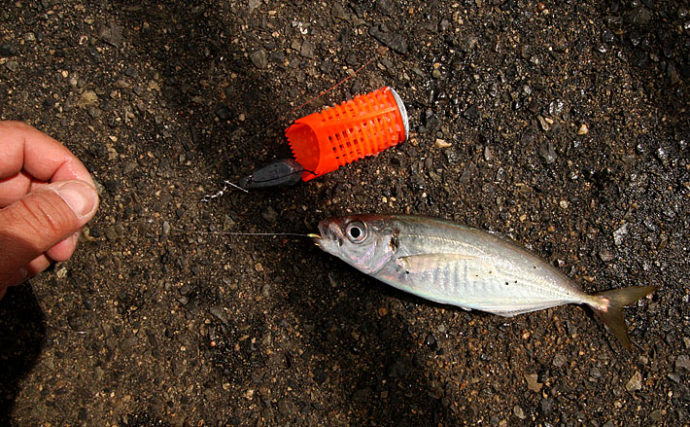 釣りの『仕掛け』を自作しよう:胴突き 『8の字結び』でエダス接続
