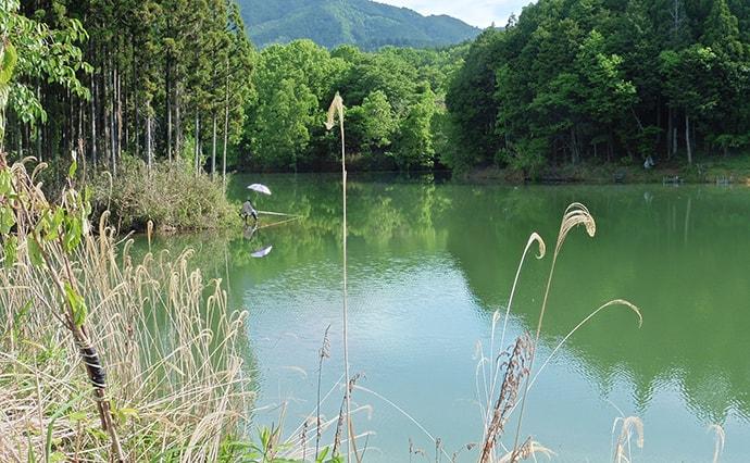 おすすめコイ釣り場:津風呂湖 遠投不要で狙いはサオ下【奈良】