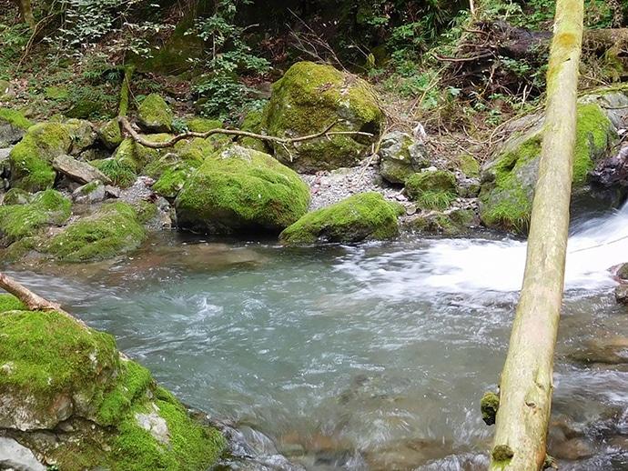 【名栗川2020初夏】ヤマメ&イワナ好釣り場紹介 「堰堤」狙いが定石か