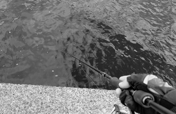納竿のタイミングでナブラが立つのはナゼ? 理由不明の釣行アルアル5選