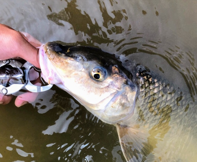 『淡水スプーン五目釣り』入門 タックル流用OKで低予算で始められる